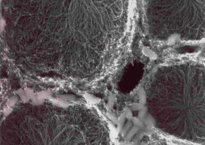 Carbon Nanotubes & Fluid Flows